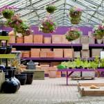 Pavilion Garden Centre Cork-15