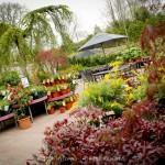 Pavilion Garden Centre Cork-20