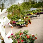 Pavilion Garden Centre Cork-5
